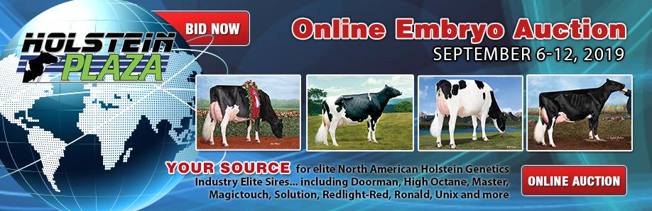 Holstein Plaza - Holstein genetics, breeders, donor cows