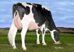Rosedale Isnt She Clever VG-88-2YR-CAN 88-MS