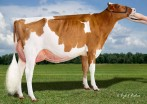 Willows-Edge Real Mink-Red EX-92 EX-MS