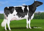 Claynook Fondness Supershot VG-85-2YR-CAN