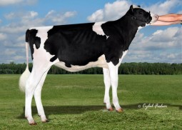 Ms Siemers Designr, she sells at the International Intrigue Sale as Lot 35